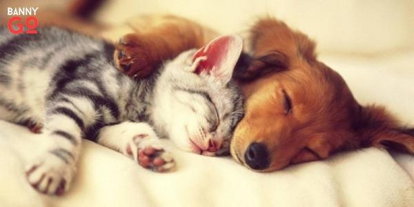 Hayvanlar Ve Rüyalar