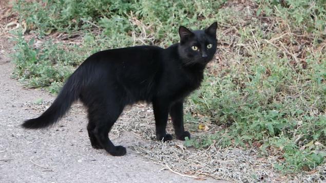 Bazıları, beyaz bir kedi görürseniz iyi şansa, siyah bir kedi görürseniz de kötü şansa sahip olacağınızı söyler.