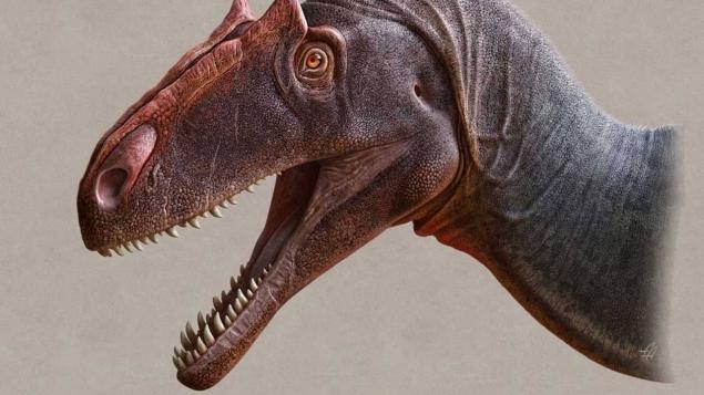 Allosaurus jimmadseni