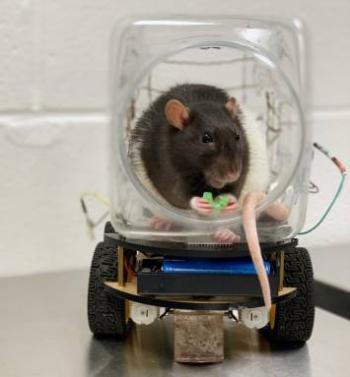 Araştırmacılar Farelere Küçük Araba Sürmeyi Öğretti
