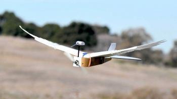 PigeonBot Gerçek Tüylerle Donatılmış Bir Robot Kuştur